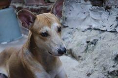 Dog, Dog Breed, Street Dog, Snout Stock Photography