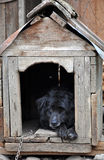Dog in the dog house Stock Images
