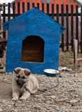 Dog in dog house Royalty Free Stock Images