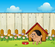 A dog with a dog house inside the fence Stock Photo