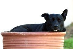 Dog, Dog Like Mammal, Dog Breed, Dog Breed Group Stock Photos