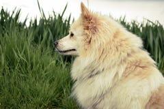 Dog, Dog Like Mammal, Dog Breed, Dog Breed Group Royalty Free Stock Images