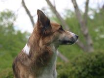 Dog, Dog Like Mammal, Dog Breed, Dog Breed Group Stock Photography