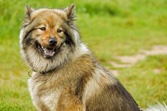 Dog, Dog Like Mammal, Dog Breed, Dog Breed Group