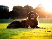 Dog, Dog Like Mammal, Dog Breed, Grass