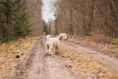 Dog, Dog Like Mammal, Dog Breed Group, Tree stock photography