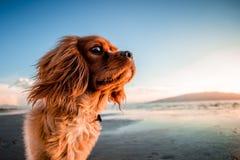 Dog, Dog Like Mammal, Dog Breed, Sky Stock Photo