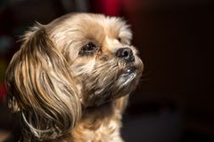 Dog, Dog Like Mammal, Dog Breed, Snout stock photography