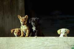 Dog, Dog Like Mammal, Dog Breed, Street Dog Royalty Free Stock Photos