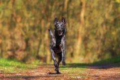 Dog, Dog Like Mammal, Dog Breed, Wildlife stock photo
