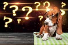Dog. Question mark thoughtful advice animal answers Stock Photography