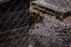 Dog dog shelter Stock Images