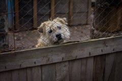 Dog dog shelter Royalty Free Stock Photo