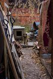 Dog dog shelter Stock Photo
