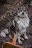 Dog dog shelter Royalty Free Stock Photos