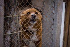 Dog dog shelter. Sad dog in dog shelter in autumn stock image