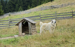 Dog and doghouse. Rural scenery in the Carpathians including a dog and doghouse Stock Image