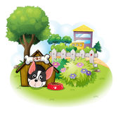 A dog with a doghouse across the high buildings Royalty Free Stock Image