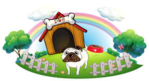 A dog with a doghouse Stock Photos