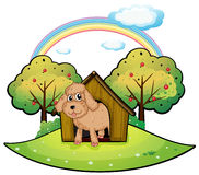 A dog with a doghouse Stock Photography