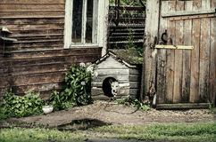 Dog in the doghouse. Mixed breed dog in the doghouse close the country building Royalty Free Stock Images