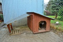 Dog and doghouse. This is a view of dog and doghouse Stock Photography