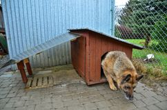 Dog and doghouse Stock Images