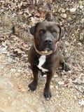Dog4 royalty free stock photos