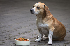 Dog and dogs food Stock Images