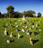 Dog Dogs In The Park. Many dogs in the park on a beautiful sunny day Royalty Free Stock Photos