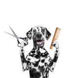 Dog doing grooming with scissors and comb. Isolated on white stock photography