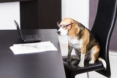 Dog-doing-the-homework Stock Images