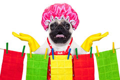 Dog doing household chores Royalty Free Stock Photography