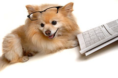 Dog Doing Sudoku Puzzle Royalty Free Stock Photos