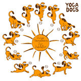 Dog doing yoga position of Surya Namaskara. Royalty Free Stock Images