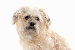 Dog. Domestic dog on white background Stock Image