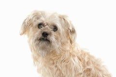 Dog. Domestic dog on white background Royalty Free Stock Images