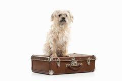 Dog. Domestic dog on white background Royalty Free Stock Photography