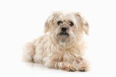 Dog. Domestic dog on white background Stock Images