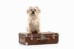 Dog. Domestic dog on white background Stock Photo