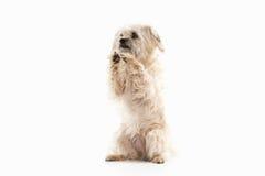 Dog. Domestic dog on white background. Domestic dog on white background stock images