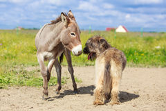 Dog and Donkey Royalty Free Stock Image