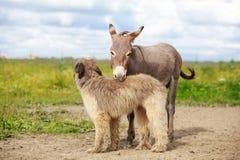 Dog and Donkey Royalty Free Stock Photography