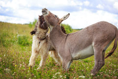 Dog and Donkey Royalty Free Stock Photo