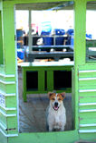 Dog and door Royalty Free Stock Photos