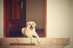 Dog in the door Stock Photo