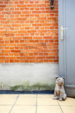 Dog door stop. On the courtyard there is a stone dog that stops the door royalty free stock images