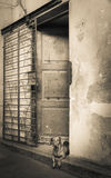 Dog In A Doorway Royalty Free Stock Photography