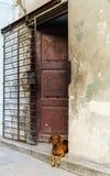 Dog In A Doorway Stock Photo