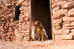 Dog in doorway Royalty Free Stock Photo